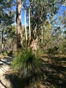 Brisbane toohey forest grass trees