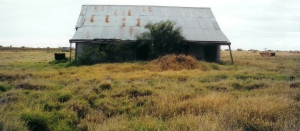 Tara Homestead 2000 shearing shed
