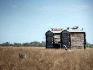 bindii tobacco barns