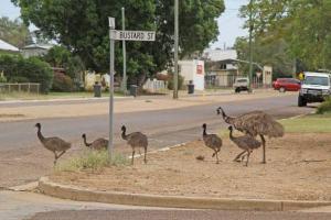 cemetery longreach emus