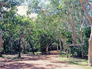 cooktown-botanic-gardens-cooktown-1