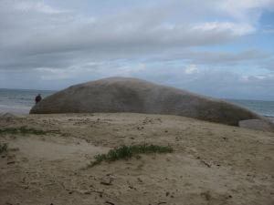 Cooktown rock